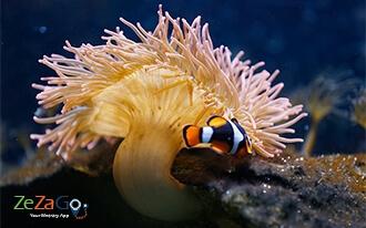 עולם הים בסכוונינגן - Sea Life Scheveningen