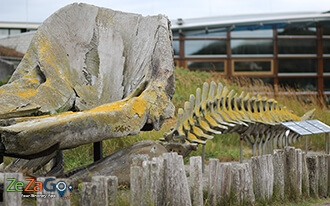 בקתת ציידי הלווייתנים באי טסל - Walvisvaarders Huisje Texel