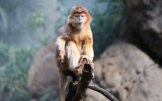 גן החיות של נואנן - Nuenen Zoo
