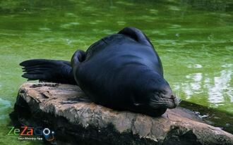גן החיות של אמן - Dierenpark Emmen