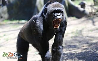 גן החיות של בורגר - Burgers' Zoo