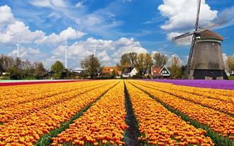 בעקבות פרחי הצבעוני (Tulip)