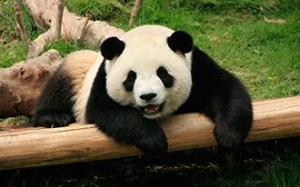גן חיות אוונהנדס - Ouwehands Zoo